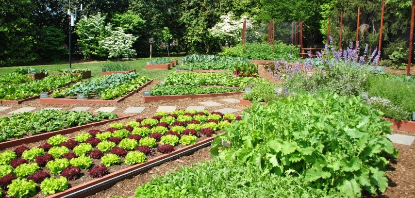 Indian kitchen garden images for Small kitchen garden plans