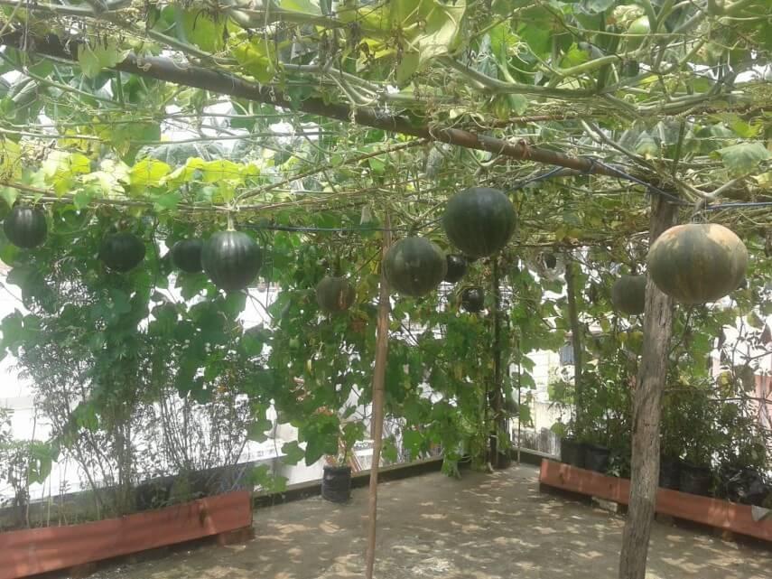 Kitchen Garden Ideas In India To Make Your Kitchen Garden ...