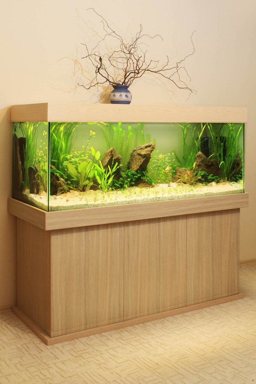 Fish Aquarium Rates In Delhi -  dreamstime krzyssagit